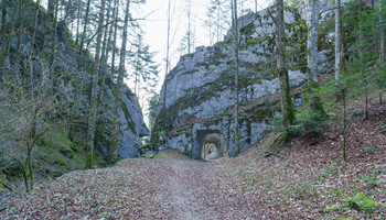 Tunnel forestier
